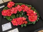 Camellias3